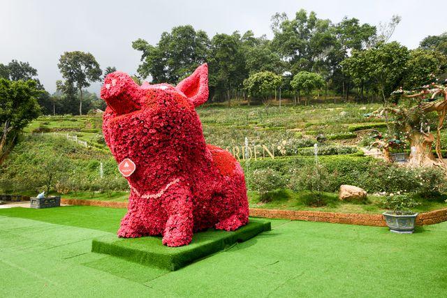 Chú Lợn được kết bằng10.500hoa hồng tươi lớn nhất Viêt Nam.