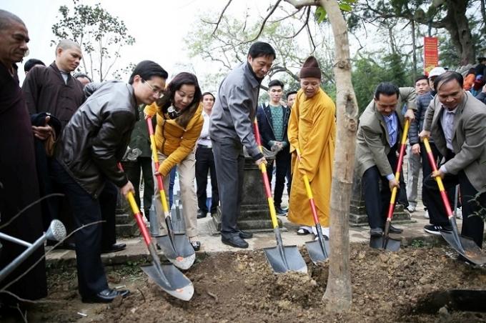 Đã có 999 cây mai vàng được trông trong khu vực chùa Hoa Hiên thuộc Khu di tích Yên Tử (Ảnh: Cổng thông tin điện tử Quảng Ninh).