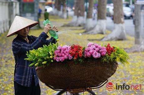 Chỉ cần sau mỗi cơn mưa rào đầu hè, đường phố Hà Nội lại như được khoác lên mình một bộ áo mới màu vàng rực.