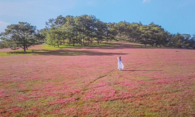 Người xem tranh hòa mình vào khung cảnh cỏ hồng.