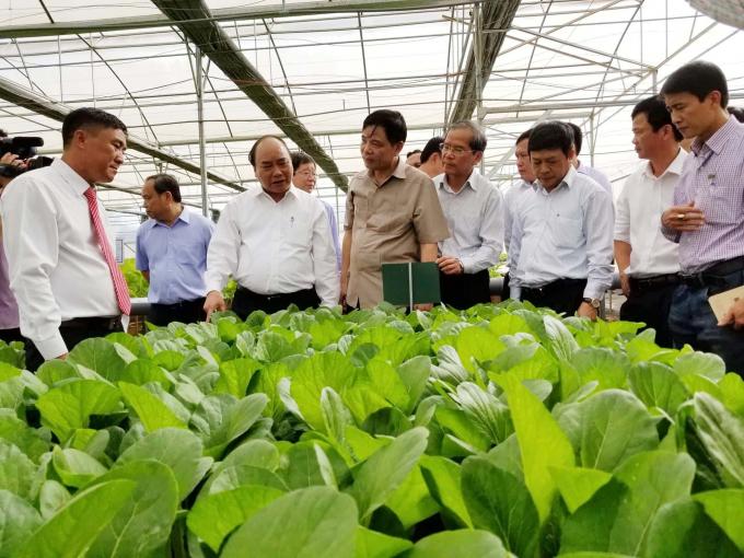 Thủ tướng Nguyễn Xuân Phúc thăm quan mô hình nông nghiệp công nghệ cao, sản xuất rau an toàn tại huyện Đức Trọng, tỉnh Lâm Đồng.