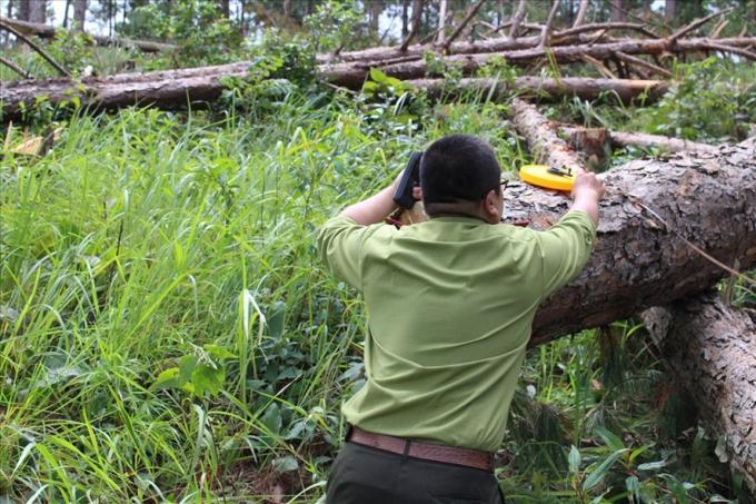 Thời gian qua trên địa bàn tỉnh Lâm Đồng liên tiếp xảy ra các vụ phá rừng.