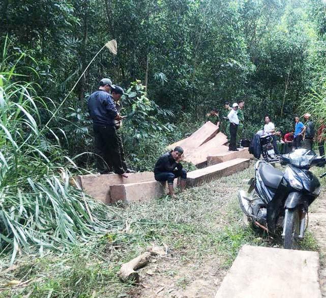 Bãi tập kết gỗ mà người dân phát hiện báo chính quyền địa phương.