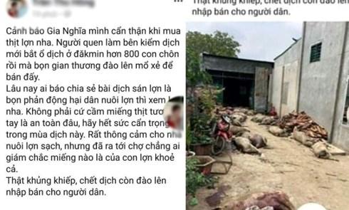 Chủ facebook tung tin sai sự thật về dịch lợn trên mạng xã hội.