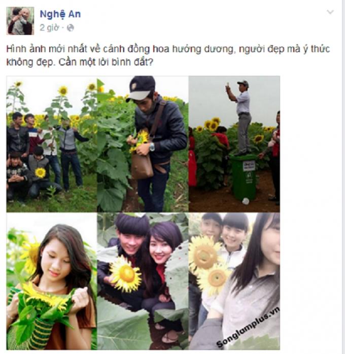 Dân mạng tiếp tục lên án mạnh mẽ hành động phá hoại của một số ít các bạn trẻ tại cánh đồng hoa hướng dương ở Nghệ An.