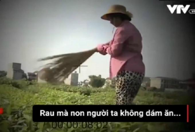 Người dân đang dùng chổi quét qua những luống rau xanh làm giả rau sâu. Ảnh cắt từ clip.
