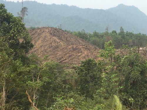Hiện trạng một khoảnh rừng ngay sát khu thi công dự án cáp treo Yên Tử tại huyện Sơn Động vào tháng 5/2016. (Ảnh: Anh Thế)