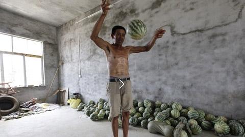 Theo ông Cung, vài ngày trước ông kiểm tra xem loại dưa này đã chín chưa, lỡ tay làm rơi. Chẳng những quả dưa không vỡ mà còn nảy tưng lên như quả bóng cao su. (Ảnh: Chinanews).
