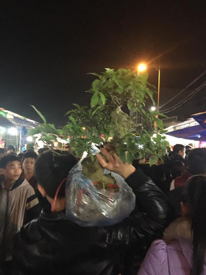 Nhiều người chọn mua cho mình một cây