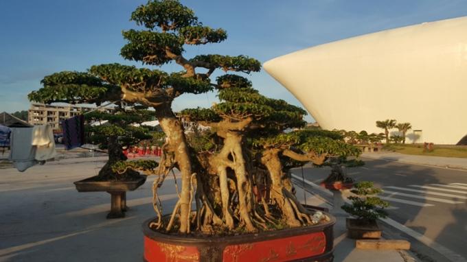 Chiêm ngưỡng những tác phẩm nghệ thuật Bonsai đặc sắc tại hội chợ OCOP Quảng Ninh lần thứ V