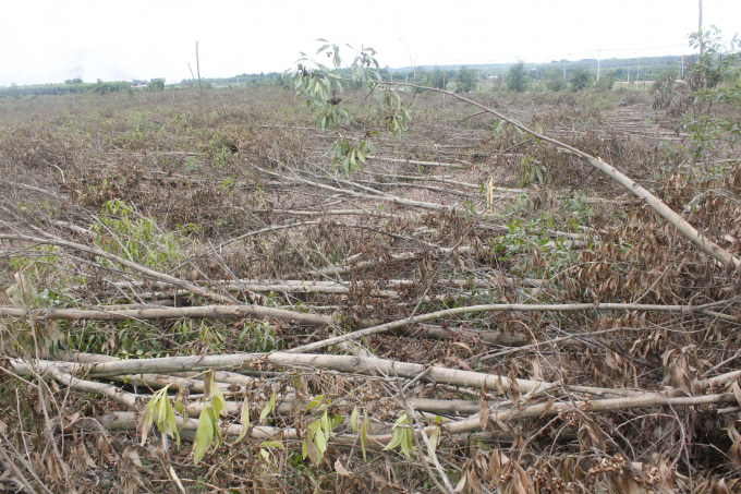 UBND xã An Phước ghi nhận, hơn 10 ha rừng của gia đình ông Thảo bị Công ty Tín Nghĩa cho người đốn hư hại.