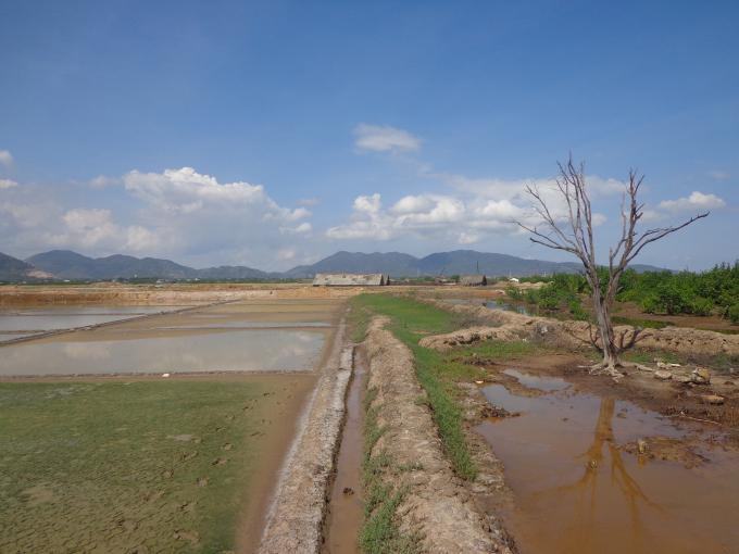 Ruộng muối của người dân đang canh tác nhiều năm khi thu hồi lại được cho là rừng phòng hộ.