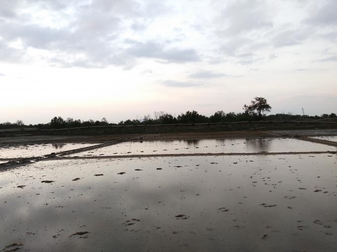 Ruộng muối của người dân đang canh tác từ xưa đến khi bị thu hồi lại được chính quyền địa phương cho là rừng phòng hộ.