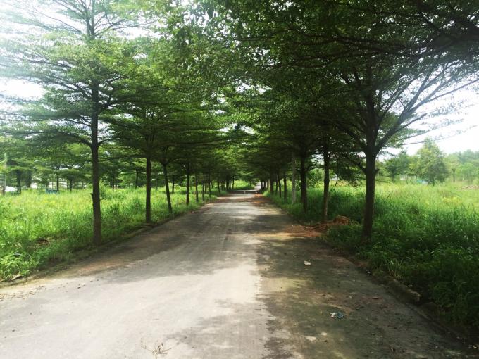 Đường nội khu của dự án hoàn chỉnh.