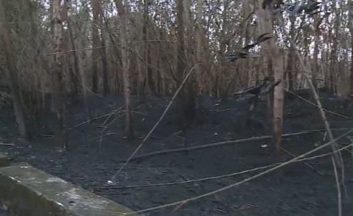 Vụ cháy rừng gây thiệt hại khá lớn.