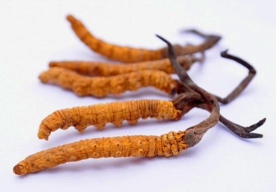 Đông trùng hạ thảo khô.