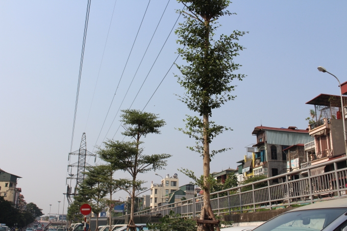 Một số cây hiện tại đã không đảm bảo an toàn đối với những đoạn bụng dây.