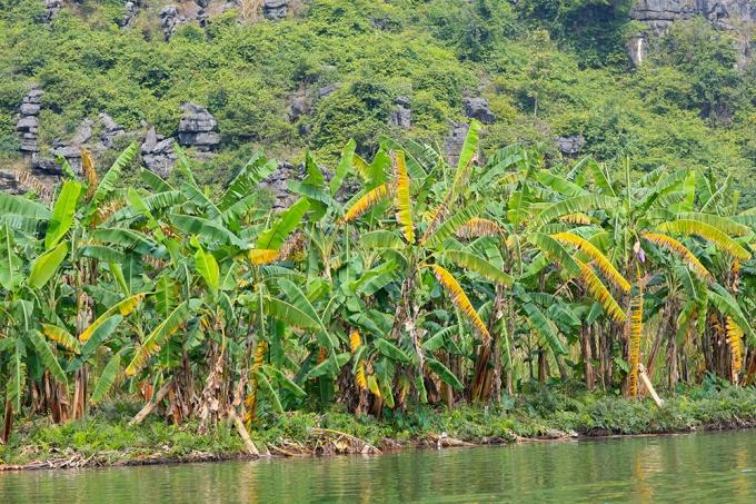 """Những hình ảnh hiếm hoi lạ lùng của """"Kong: Skull Island"""" tại Ninh Bình."""