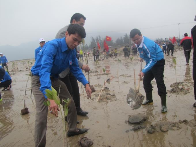 10.000 cây xanh đã được trồng tại ven biển xã Cẩm Lĩnh,huyện Cẩm Xuyên (Hà Tĩnh).