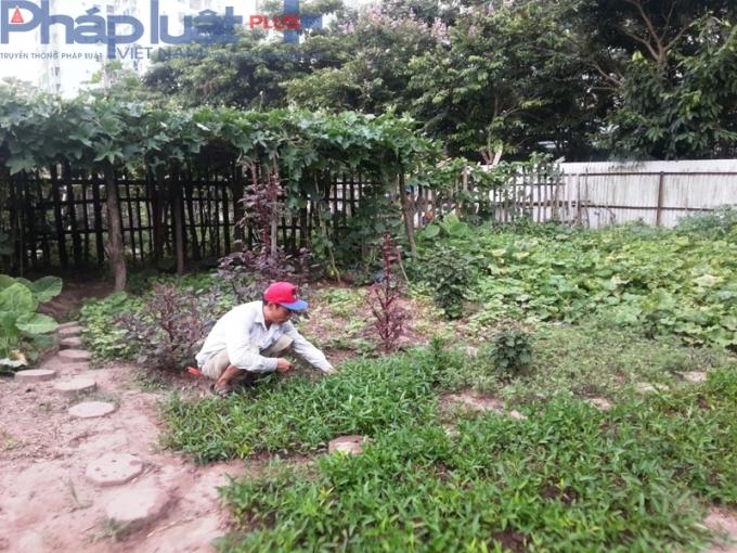 Trong khu vườn nhỏ này, rất nhiều loại rau được trồng, từ rau muống, rau đay, bí xanh cho tới bí đỏ...