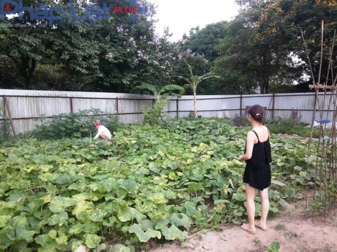Vì thừa rau trồng, nên nhiều hộ đã bán cho những người cần mua rau sạch.