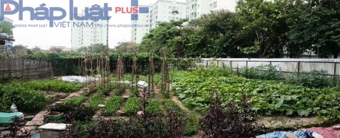 Hơn 100 hộ dân sinh sống trong Khu đô thị Pháp Vân - Tứ Hiệp (Hoàng Mai, Hà Nội) đã tự quây thành các ô đất nhỏ để trồng rau.