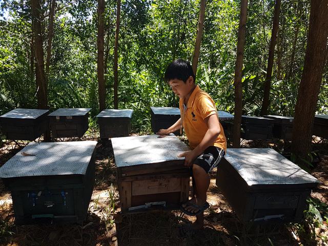 Trại ong khoảng 400 thùng nhưng giá quá rẻ nên anh Hải đành để ong tự ăn, chủ ong không quay mật