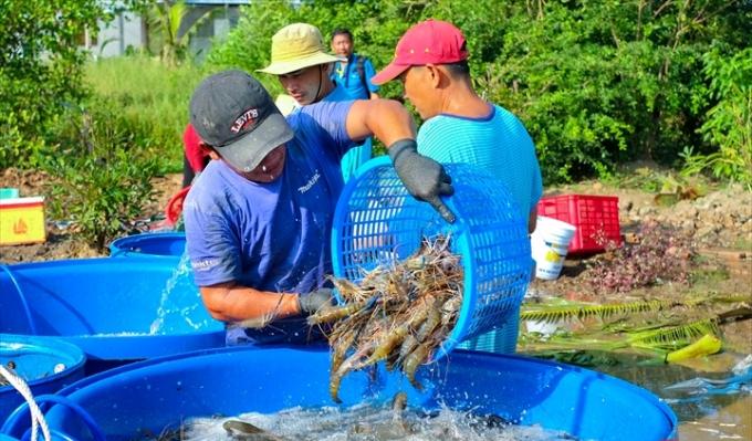 Khó khăn lớn của thủy sản Việt Nam là sự bị động và phụ thuộc về giá cả lẫn chất lượng của thức ăn và con giống. Ảnh: TTXVN