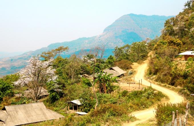 Tại Điện Biên, cây hoa Ban phân bổ khá rộng tại các huyện: Mường Ảng, Điện Biên, Điện Biên Đông, Tủa Chùa, và ngay tại trung tâm thành phố Điện Biên Phủ.