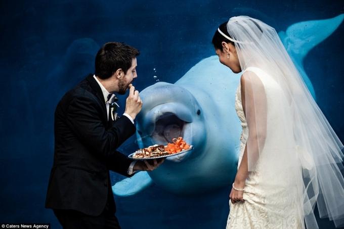 Mời cá heo cùng dự cưới