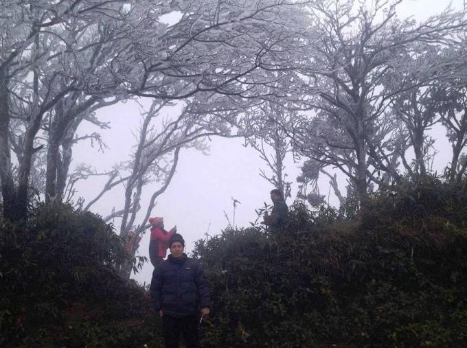 Do rét đậm nên tại đỉnh núi Phia Oắc, Nguyên Bình đã có băng giá phủ trắng những cành cây (Ảnh: Cao Bằng nơi tôi sống).
