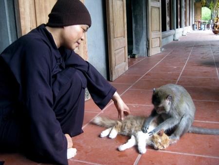 Sư Thích Diệu Mơ - trụ trì chùa Nhẫm Dương - chơi đùa với một con khỉ của mình.