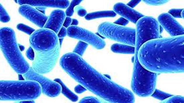 Lợi khuẩn Bifido là chìa khóa giúp cân bằng hệ vi sinh vật đường ruột.