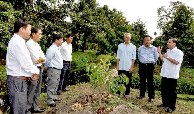 Bí thư Thành ủy Cần Thơ Trần Quốc Trung (ngoài cùng bên phải) tham quan mô hình cải tạo vườn, trồng cây ăn quả tại huyện Thới Lai.