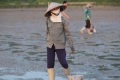 """Theo chân """"dáng cò"""" gánh cả gia đình trên bãi biển Quảng Ninh"""