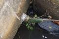 Phát hiện thi thể người đàn ông chết trong cống nước, chỉ lộ 2 chân ra ngoài