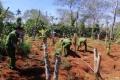 Đắk Lắk: Bắt quả tang 2 anh em trồng hơn 1.500 cây cần sa trái phép