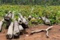 Khởi tố vụ 27m3 gỗ lậu tại Trung tâm Bảo tồn voi