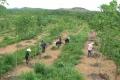 Sẽ thu hồi những dự án sử dụng đất có nguồn gốc nông, lâm trường chậm tiến độ