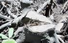 """Rừng phòng hộ Long Thành: Bị tỉa """"quá tay"""" gần 2.000m3 gỗ"""