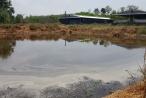 Mất mùa, ô nhiễm do trại lợn xả thải?