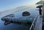Khánh Hòa: Cần xử lý hình sự vụ giang hồ đập phá tan hoang cơ sở du lịch để tránh tiền lệ xấu