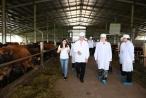 Sữa Cô gái Hà Lan vinh dự đón tiếp Thứ trưởng Hà Lan đến thăm dự án tại Hà Nam