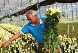 Tây Nguyên chuẩn bị 1.500 ha hoa phục vụ Tết