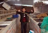 Kiếm tiền nhờ nghề nuôi rắn độc ở Hà Tĩnh