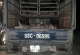Bắt giữ 32 con lợn lở mồm long móng trên đường đi tiêu thụ