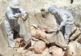 FAO: Việt Nam nên ban bố tình trạng khẩn cấp Quốc gia về dịch tả lợn châu Phi