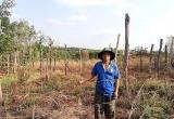 """Vụ """"Liên kết rồi… bỏ chạy"""": UBND tỉnh Gia Lai chỉ đạo tìm giải pháp bảo vệ nông dân"""