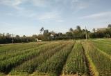 Thừa Thiên Huế: Tín hiệu 'hồi sinh' ở làng hoa Phú Mậu