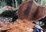 Bài 4: UBND tỉnh Bắc Kạn cảm ơn báo Pháp luật Việt Nam đã phản ánh kịp thời vụ phá rừng tại Ba Bể